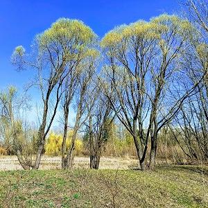 Ботанический сад Самарского университета им. Королёва открылся для посещения