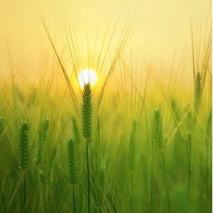 """""""Электронный агроном"""" даст прогноз на урожай и поможет фермеру советом"""