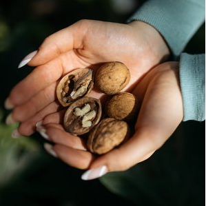 Biologists of the Samara University filed a patent for walnuts