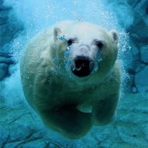 Северный федеральный университет имени М.В. Ломоносова приглашает принять участие в конкурсе проектных идей «Постигая  Арктику – 2016»