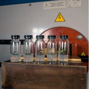 Ученые разрабатывают способ лечения картофеля импульсным магнитным полем