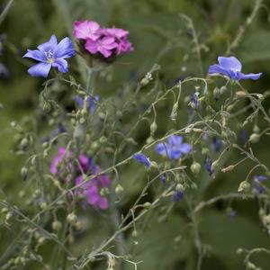 В Ботаническом саду Самарского университета создают аллею