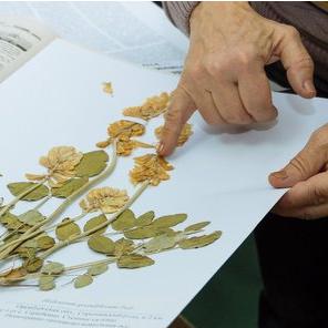 Samara University to Place Largest Collection of Volga-Urals Region Plants Online